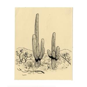 tumamoc_cactus_2