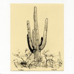 tumamoc_cactus_3