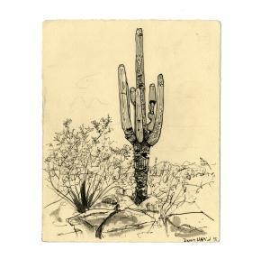 tumamoc_cactus_8_web