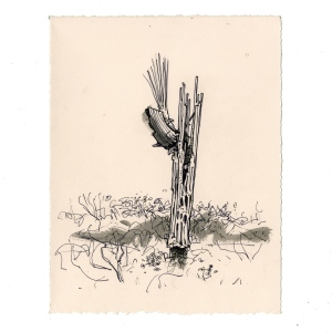 tumamoc_cactus_13_web