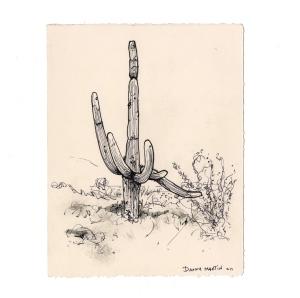 tumamoc_cactus_14_web
